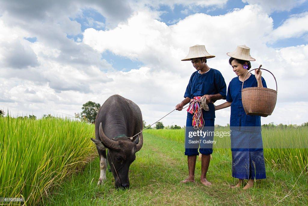 Couple farmer with buffalo : Stock Photo