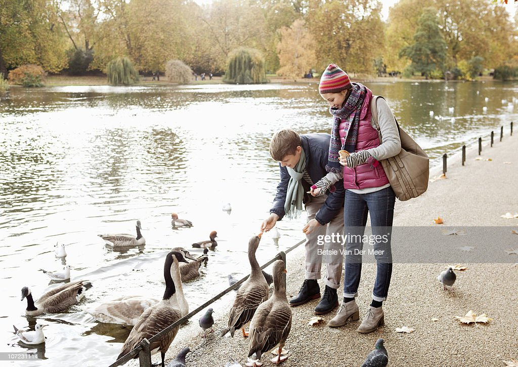 Couple feeding ducks and geese in park. : Foto stock