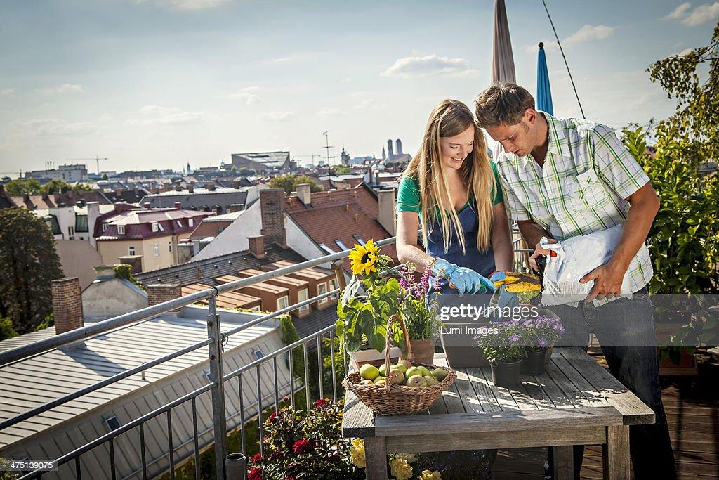 Couple Gardening On Balcony, Munich, Bavaria, Germany, Europe