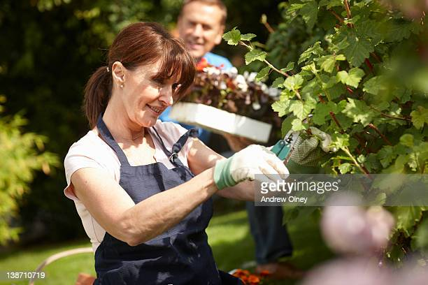 Couple gardening together in backyard