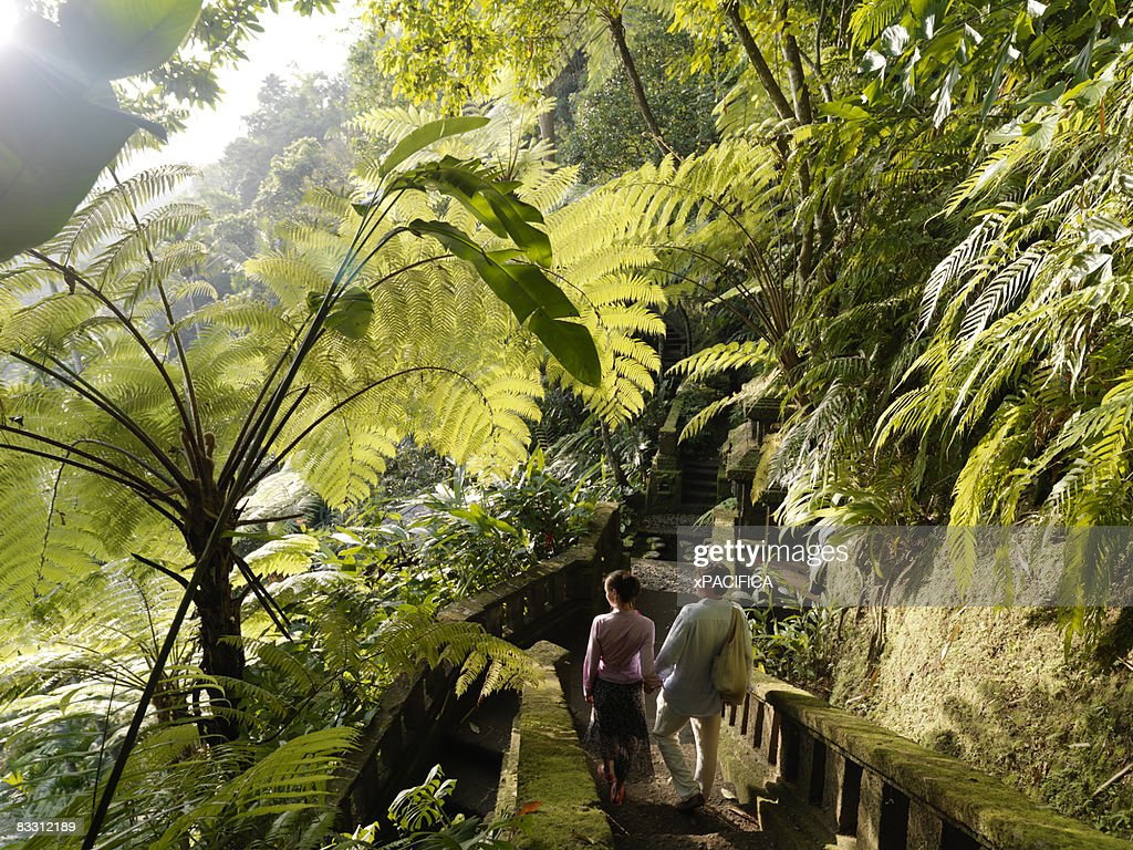 Couple hiking through tropical forest : Stock Photo