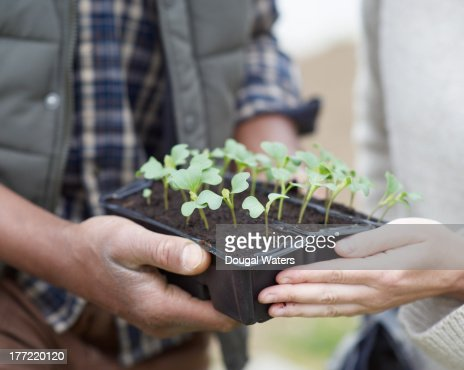Couple holding seedlings in pot, close up. : Foto de stock