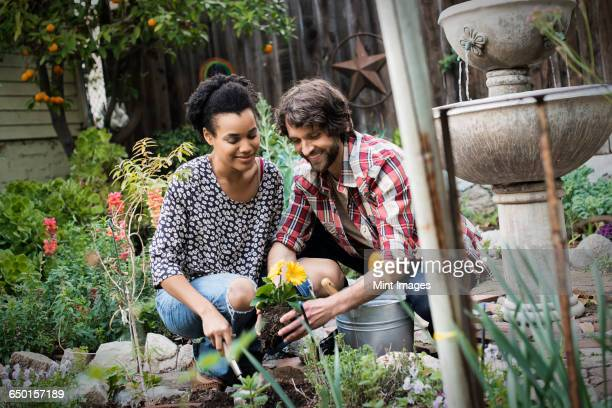 A couple in the garden planting flowers.
