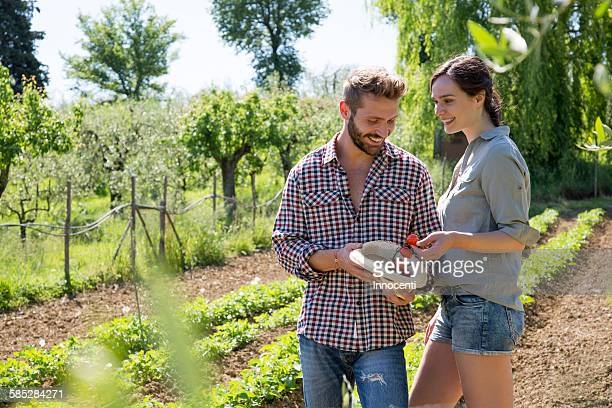 Couple in vegetable garden putting tomatoes in hat smiling