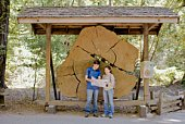 Couple looking at map, Henry Cowell Redwoods State Park, Felton, California