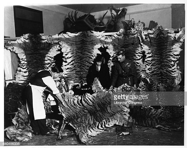 Couple Looking at Tiger Skins