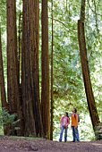 Couple looking up at redwood trees, Felton, California