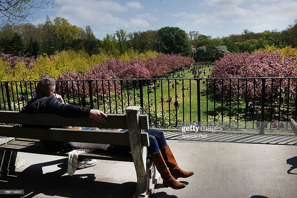 A couple looks out over cherry blossom trees at the Brooklyn Botanical Garden on May 5, 2013 in New York City. The botanical garden, which sits on 52-acres, features numerous gardens and a conservatory. The Brooklyn Botanical Garden is famous for their cherry blossoms, which typically bloom at the end of April and are a centerpiece of the Garden's annual cherry blossom festival which attracts thousands of visitors.