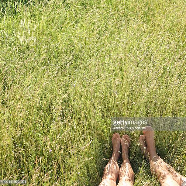 Couple lying in tall grass, low section, summer