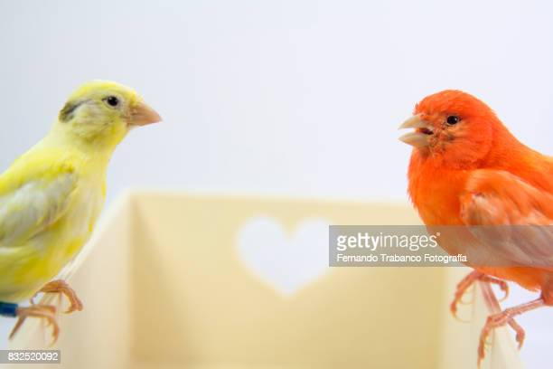 Couple of birds perched on box with hearts. Animal love