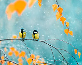 couple of cute birds Tits in the Park sitting on a branch among bright autumn foliage during a snowfall