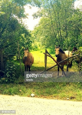 Couple of horses : Stock Photo