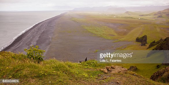 A couple of puffins looking at the black beach beach : Foto de stock