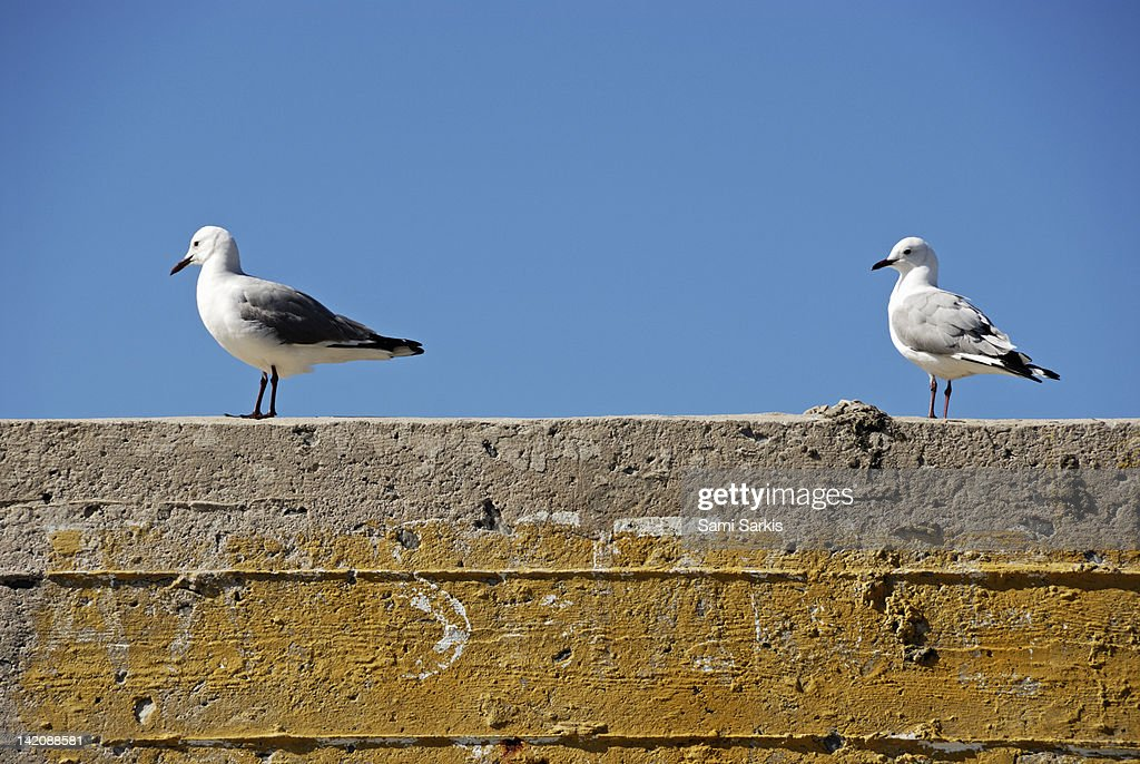 Couple of Seagulls on a wall : Stock Photo