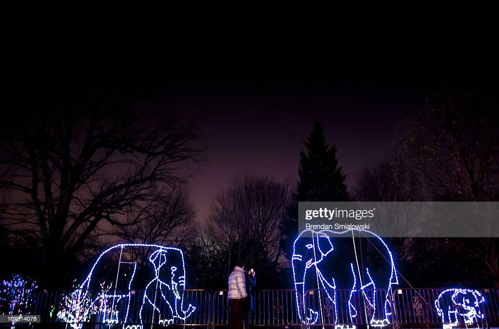 A couple photographs a elephant made of lights the Smithsonian's National Zoo December 29, 2010 in Washington, DC. The National Zoo decorated its main walk with holiday lights and other decorations for its yearly Zoo Lights celebration.