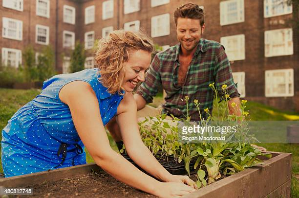 Couple planting raised bed on council estate allotment