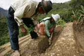A couple plants coca on their small farm December 21 2005 in the town of Coroico in the Yungas Bolivia Evo Morales the newly elected Bolivian...
