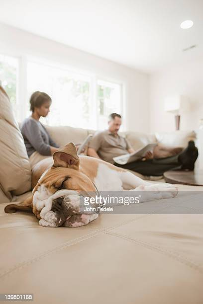 Couple relaxing on sofa with English bulldog