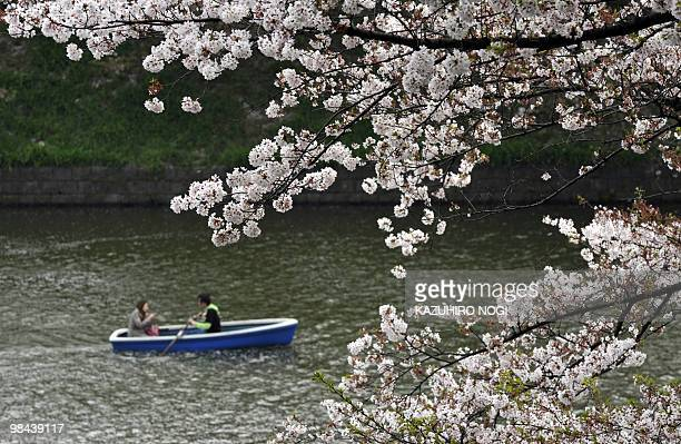A couple rows their boat on a moat to admire the last stages of the fullbloom cherry blossoms in Tokyo on April 11 2010 Japanese people all over the...
