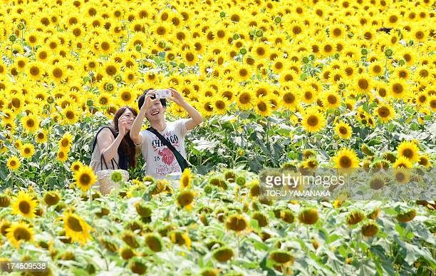 A couple take pictures with a smartphone in a field of sunflowers in full bloom in Zama Kanagawa prefecture on July 27 2013 Zama city has two...