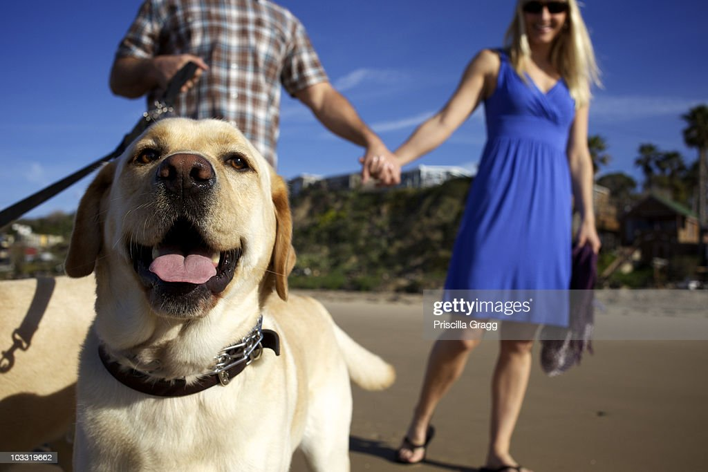 Couple take their dogs for a walk at the beach. : Stock Photo
