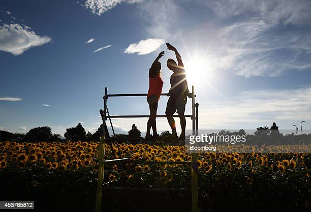 A couple takes a photograph using a smartphone in front of sunflowers growing in a field during the Zama Sunflower Festival in Zama Kanagawa...