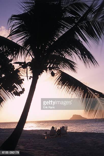 Couple Under Palm Tree