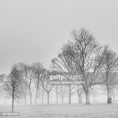 Couple Walking In Park During Foggy Weather