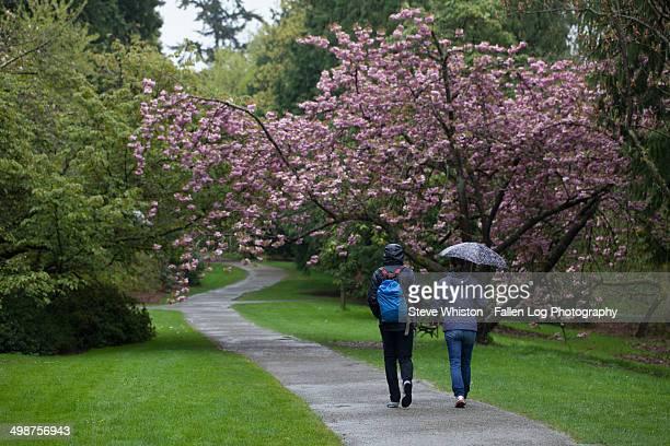 Couple walking in the rain, Arboretum