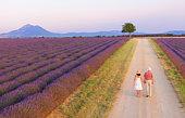 Couple walking on roadway between lavender fields