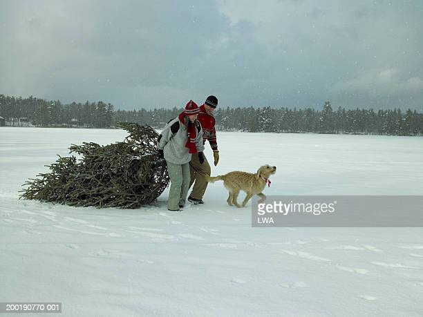 Couple with dog hauling Christmas tree over snow