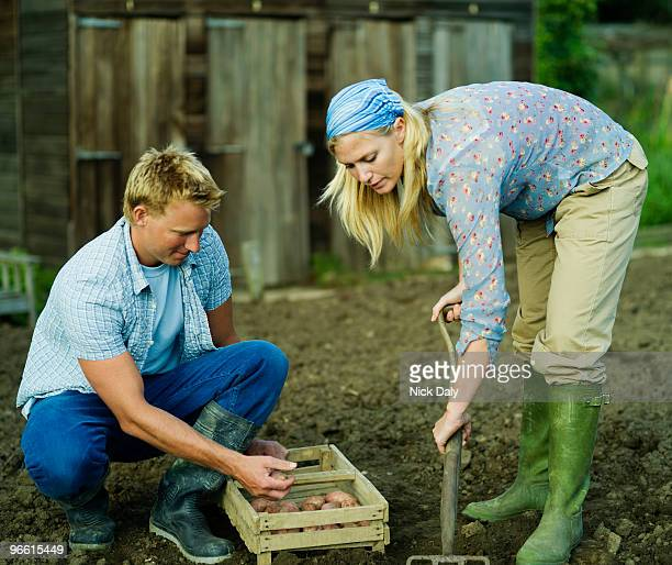 A couple working in a vegetable garden