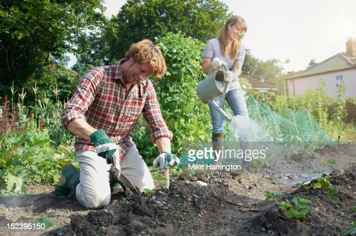 Couple working in allotment : Stock Photo