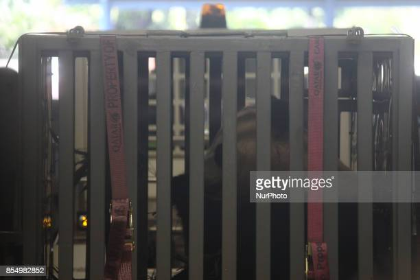 A couples of Giant Pandas arrived at the cargo terminal of SoekarnoHatta International Airport Indonesia on September 28 2017 Indonesia is getting...