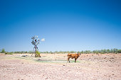 A cow and windmill in outback Australia.