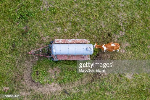 A cow drinking captured from a hot air balloon : Stock Photo