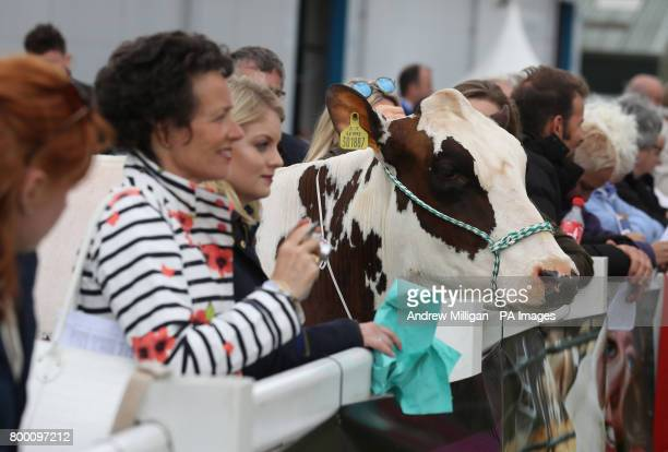 A cow joins the crowds viewing the show rings during the Royal Highland Show in Edinburgh