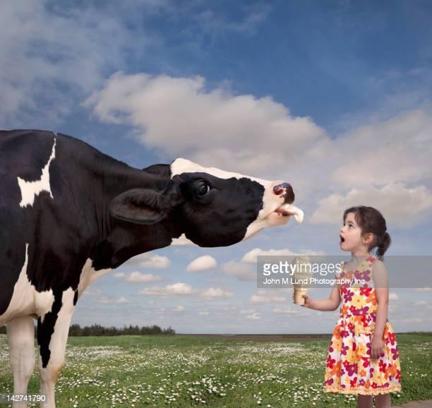 Cow licking Caucasian girl's ice cream cone