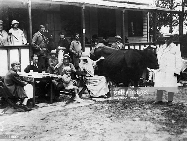 Cow Offers Its Milk In A Cafe In Le Touquet In The 1930S