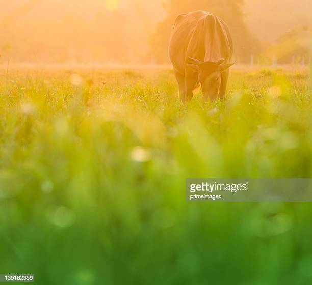 Cow on  beautiful sunny landscape
