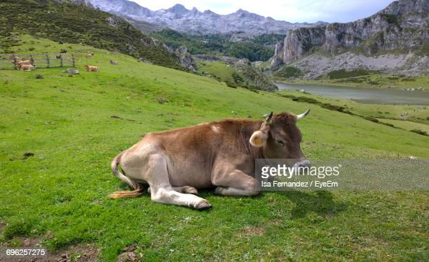 Cow On Green Landscape Against Sky
