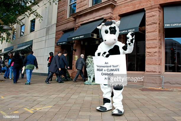 PETA cow protests raising animals for food and its effects on climate change at PETA's Go Vegan To Go Green Protest at 601 Pennsylvania Ave on...