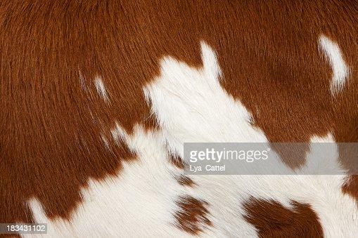 Cow skin # 3