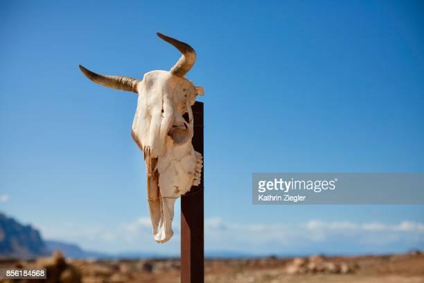 Cow skull on a pole against blue sky, Sicily