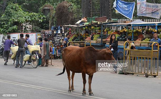A cow stands on a road in Siliguri on April 4 2014 Indian election frontrunner Narendra Modi the vegetarian Hindu nationalist tipped to be the next...