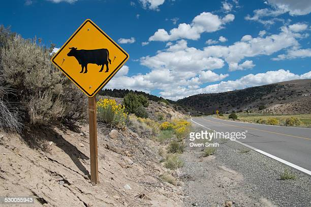Cow warning sign on highway, Bodie National Park, California, USA