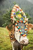 Cow wearing headdress in grassy field