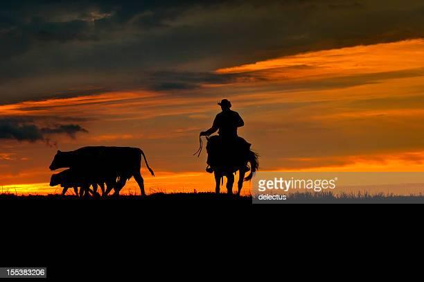 カウボーイと牛