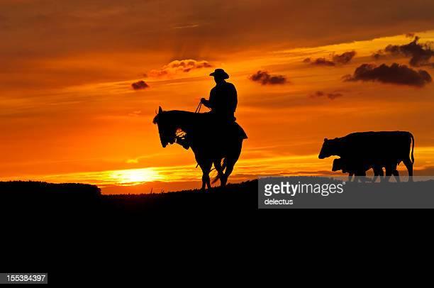 Cowboy and Cows