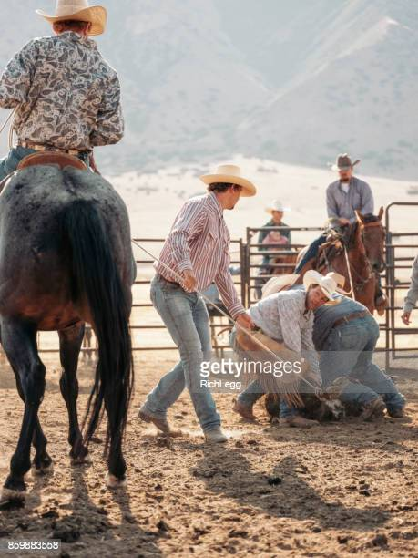Cowboy Cattle Branding Operation